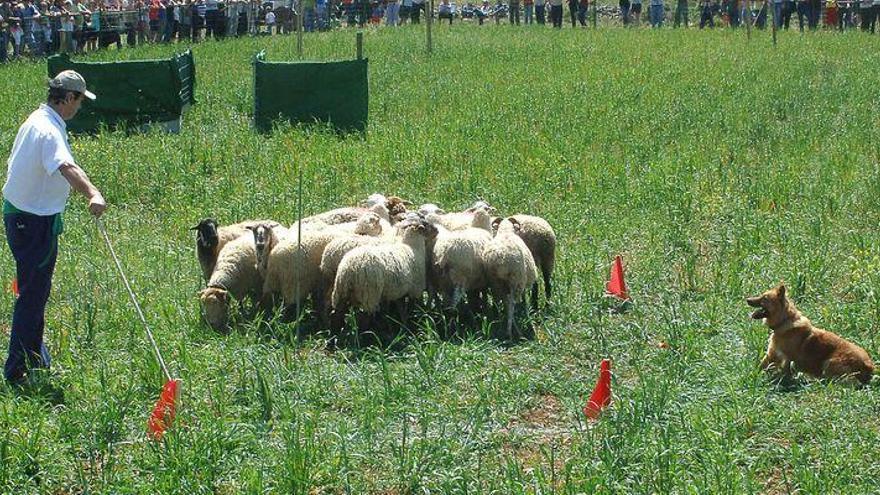 ¿Buscas un plan para el fin de semana? Ares recibe a los mejores perros pastores