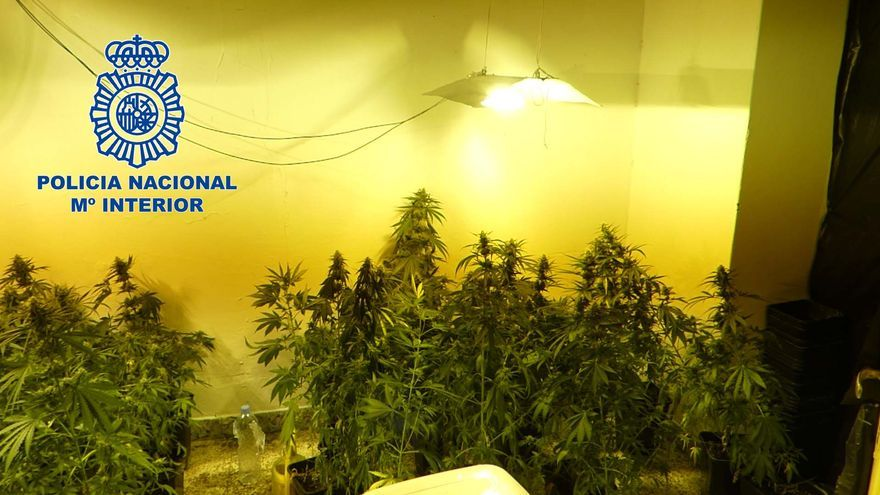 Dos detenidos por tráfico de drogas tras desmantelar una plantación de marihuana en Villanueva