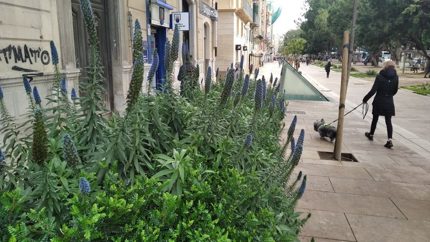 El orgullo de Madeira, en la Alameda Principal