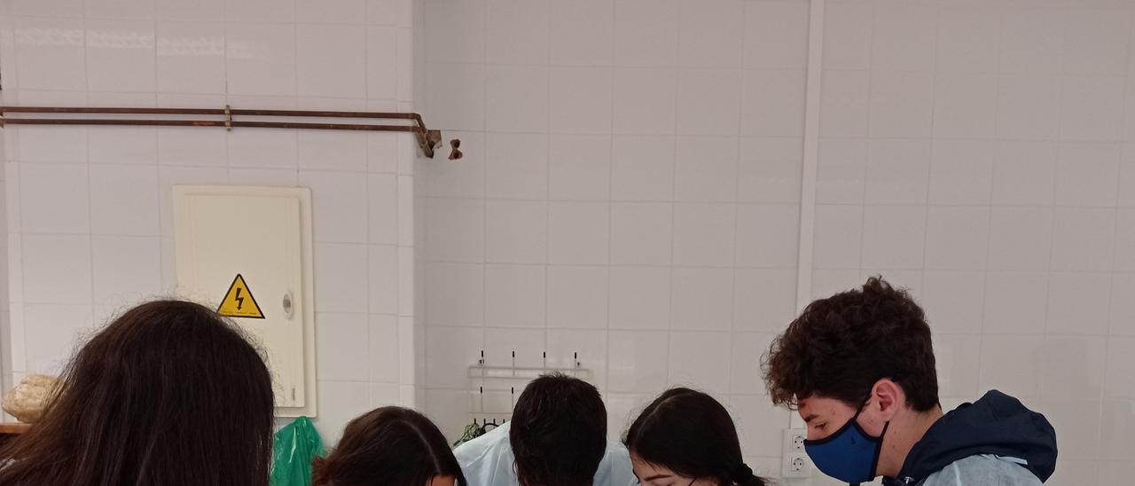 Semana de disecciones en el colegio CIDE