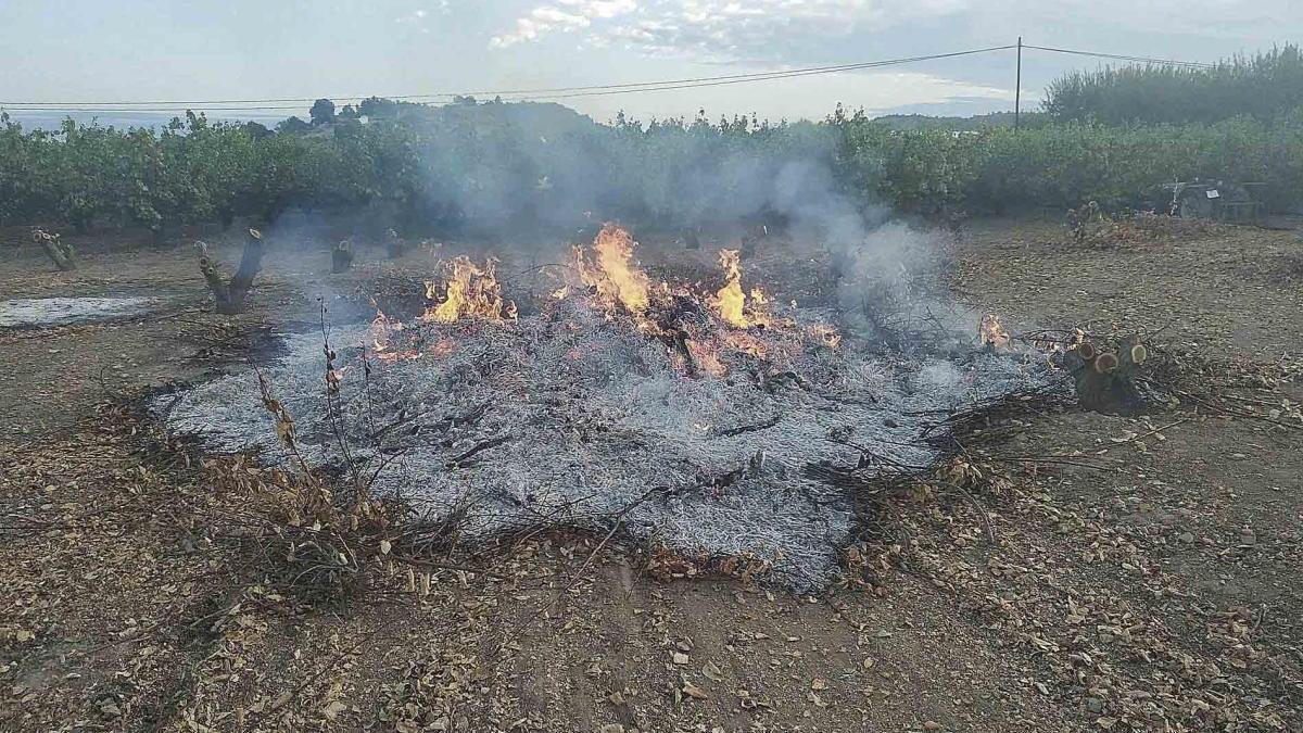 Los huertanos reclaman biotrituradoras o un camión a domicilio para evitar las quemas