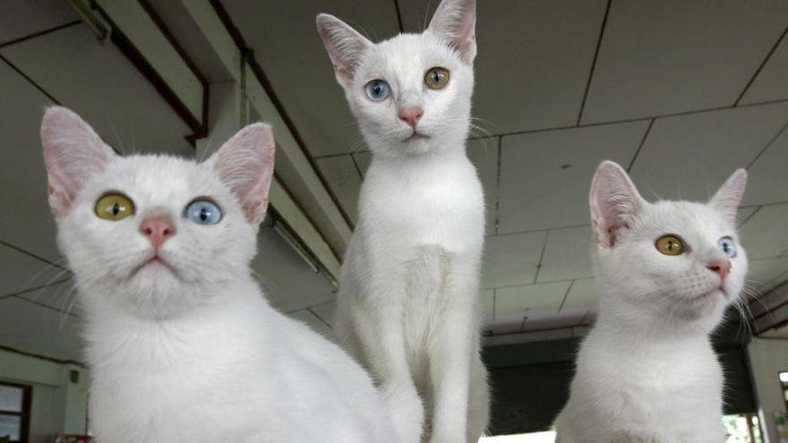 La evolución de la medicina veterinaria: Tecnología que mejorará la vida de tu mascota