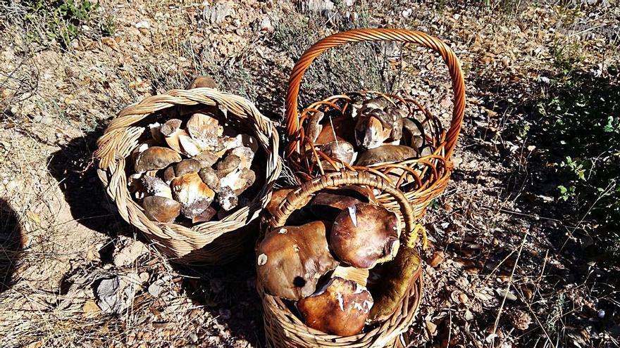El otoño abre el tiempo de recolección en Sayago y Sanabria