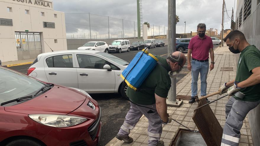 Lucha contra las plagas en Costa Ayala