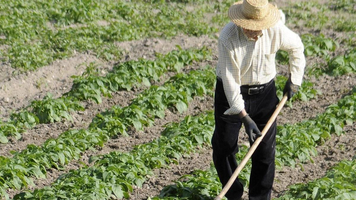 Un agricultor en Lalín. // Bernabé / Javier Lalín