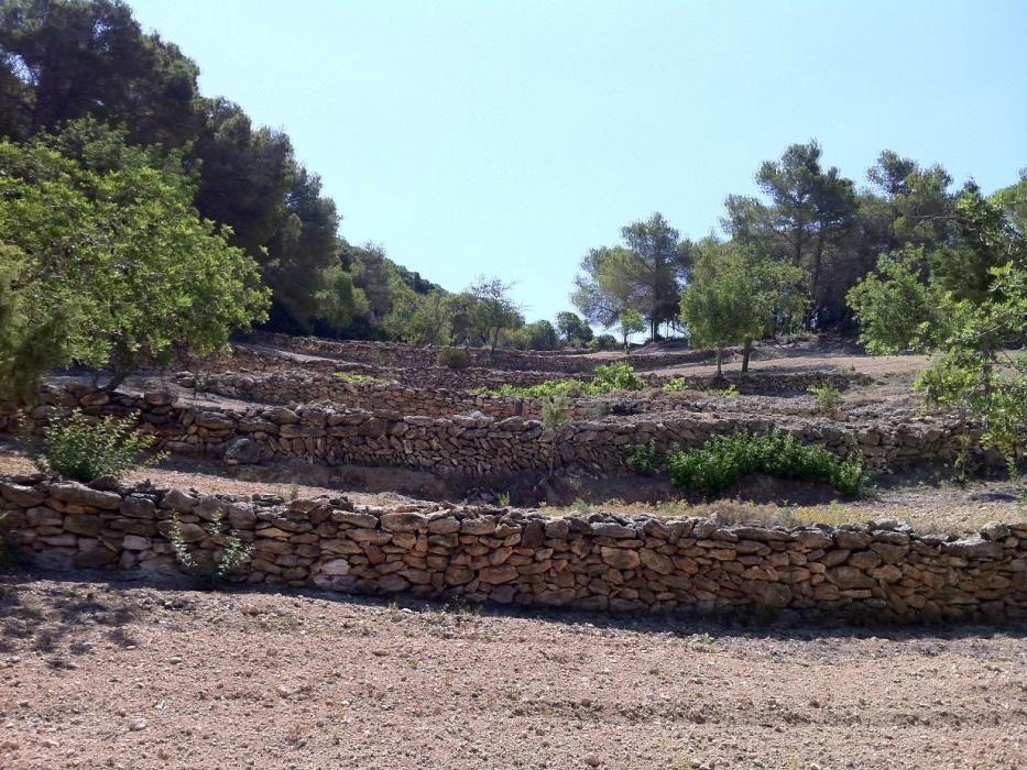 Trockensteinmauern auf Mallorca.