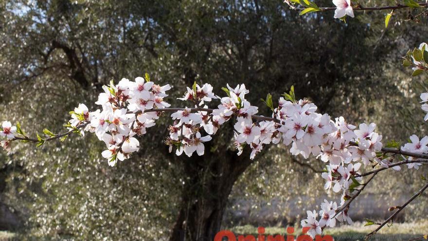 La floración llega a las Fuentes del Marqués en Caravaca