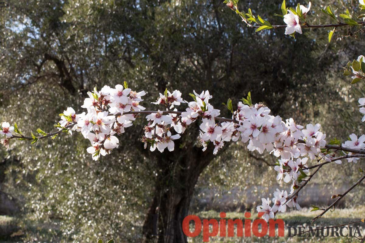 FuentesdelMarqués_Floración000jpg.jpg