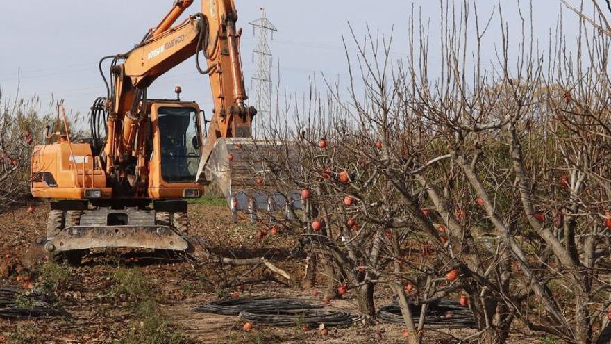 La comarca pierde más de 3.500 hectáreas de cultivo en doce años por la falta de rentabilidad