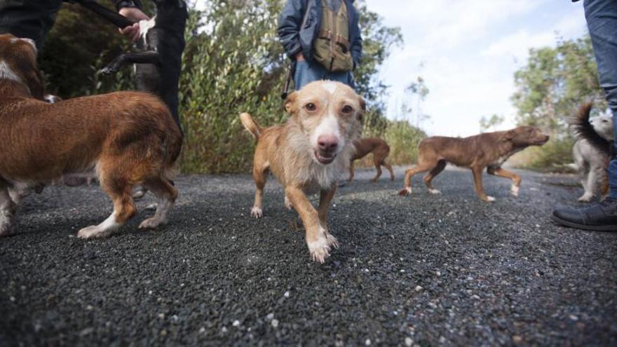 Cazadores venden sus perros 'online' por las restricciones