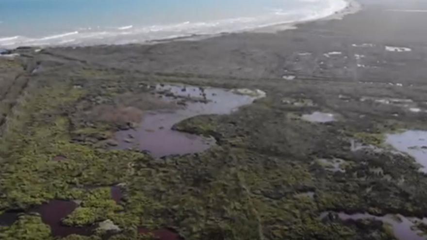 La plaga de mosquitos se agrava y preocupa la previsión de lluvias en Castellón