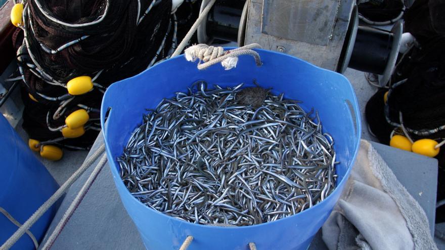 Aturen la pesca de sonso dos mesos abans del previst per falta de captures