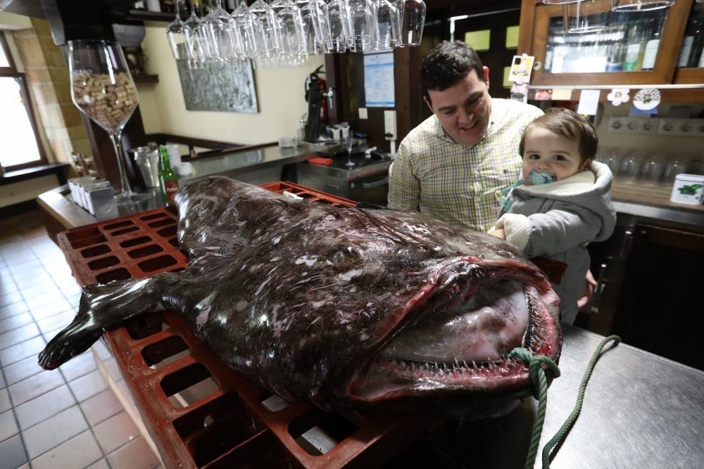 El pixín de 55 kilos del Guernica sorprende a los comensales