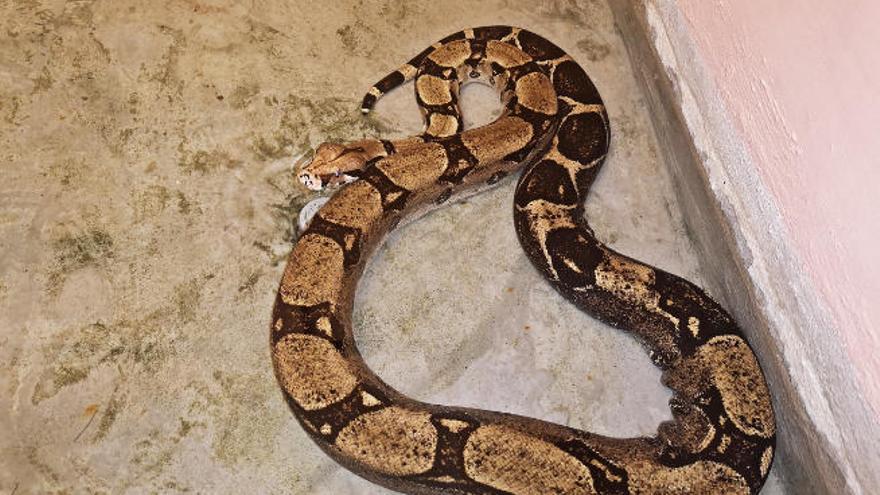 Aumenta el número de capturas de serpientes en La Cuesta y Taco