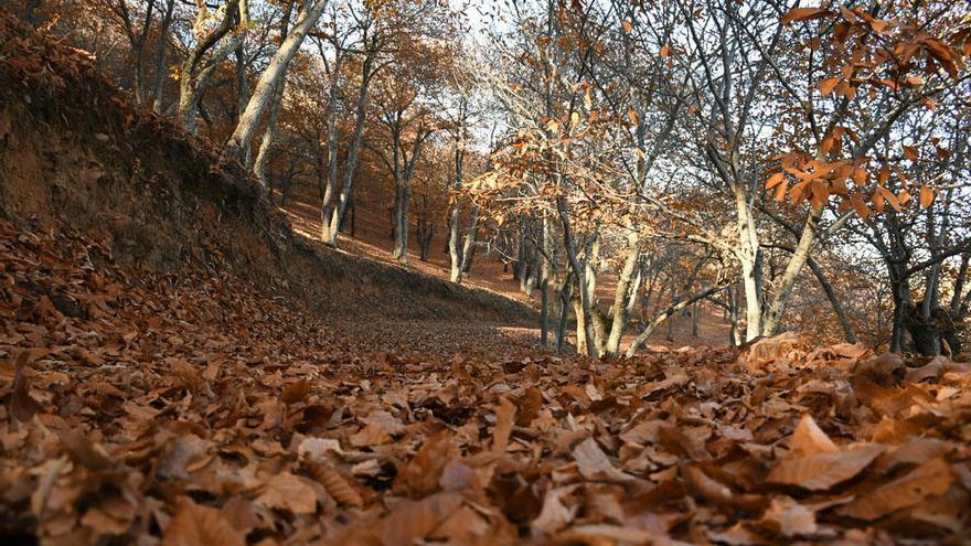 El sendero entre Pujerra e Igualeja, una ruta por parajes de ensueño