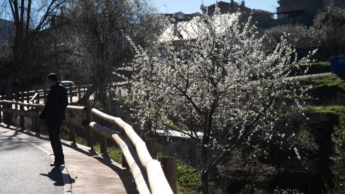 Floración de los almendros en Fermoselle