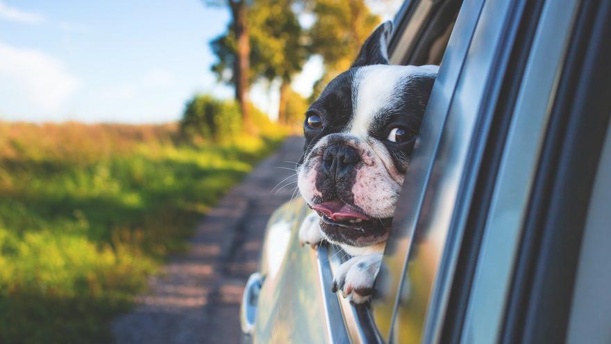 9 de cada 10 españoles prefieren el coche para viajar con su mascota