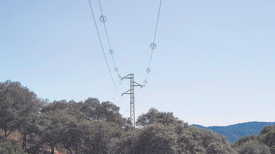 Los tendidos eléctricos, una trampa mortal