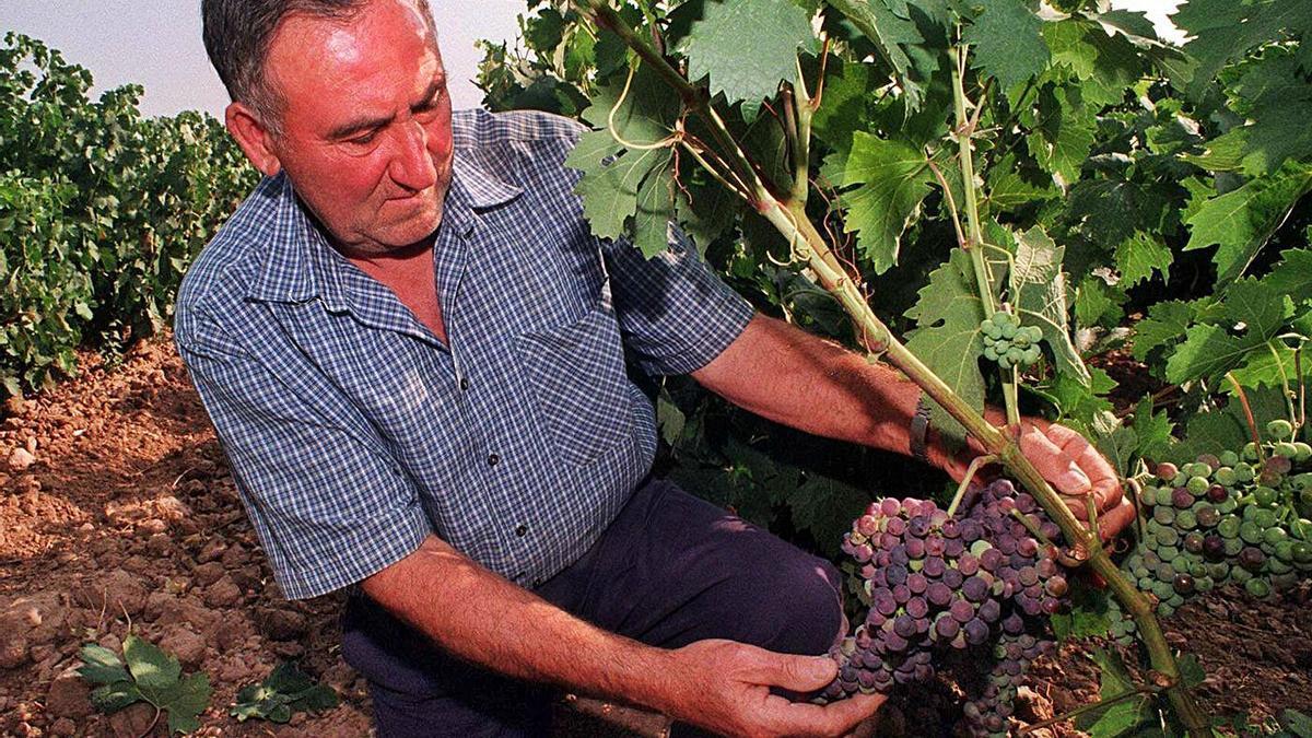 El aumento de las temperaturas afecta directamente a la cantidad y calidad de las uvas.