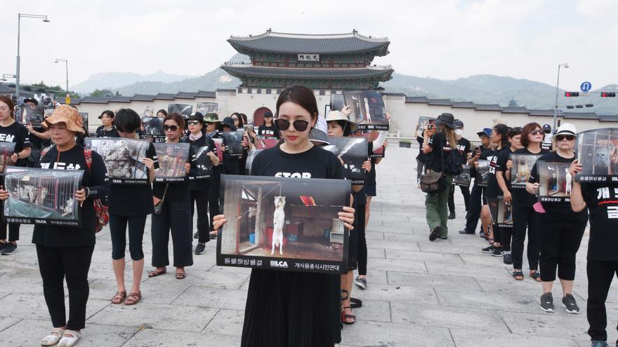 Corea del Sur estudia prohibir el consumo de carne de perro