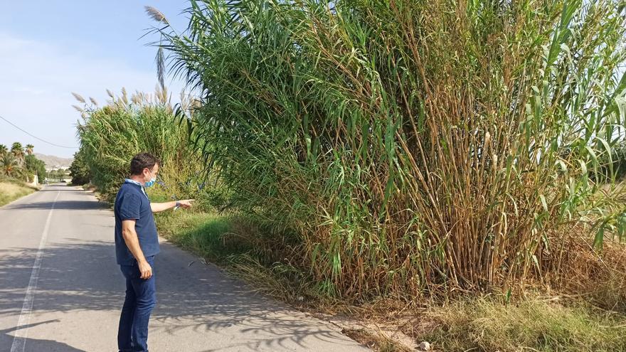El PP denuncia que la falta de desbroce supone un peligro en los caminos rurales