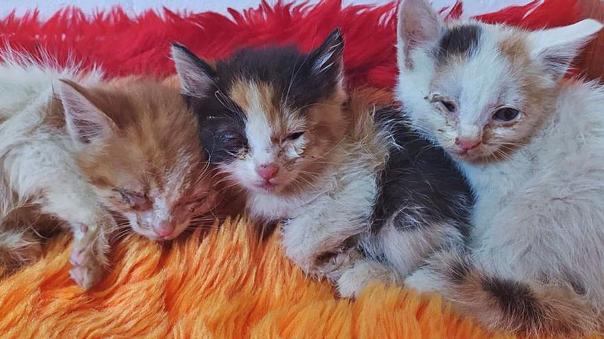 Gatos en Villabrázaro, bajo control