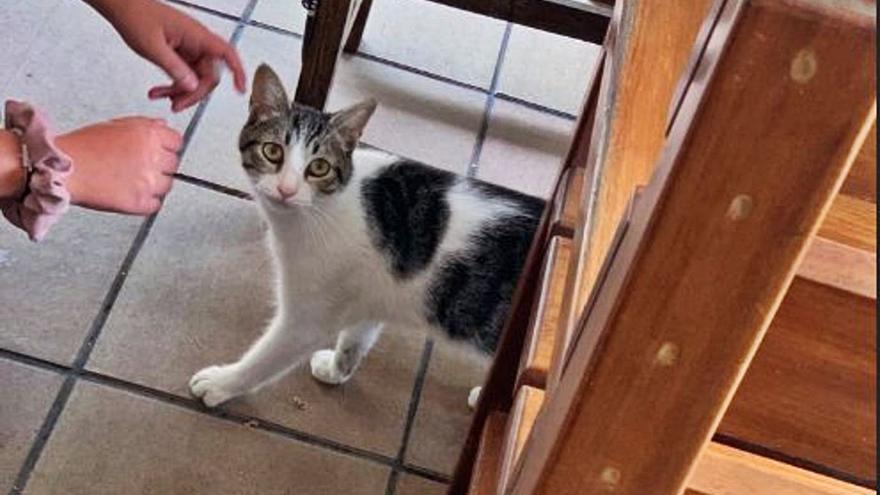 El gato de Bilbao perdido en Moaña aparece en Vilaboa