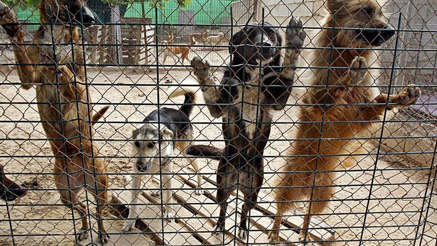 El recelo de Gandia y Oliva deja en el aire la recogida mancomunada de animales