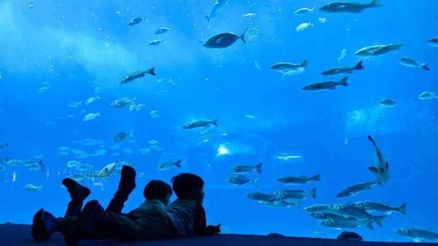 El Poema del Mar reabre el 1 de mayo con precios reducidos