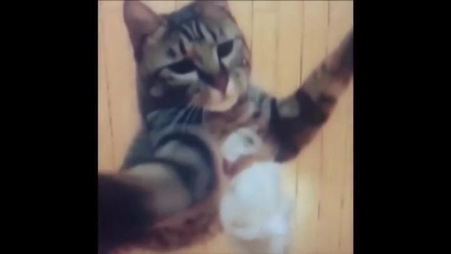 Rusia celebra una de las mayores ferias internacionales de gatos