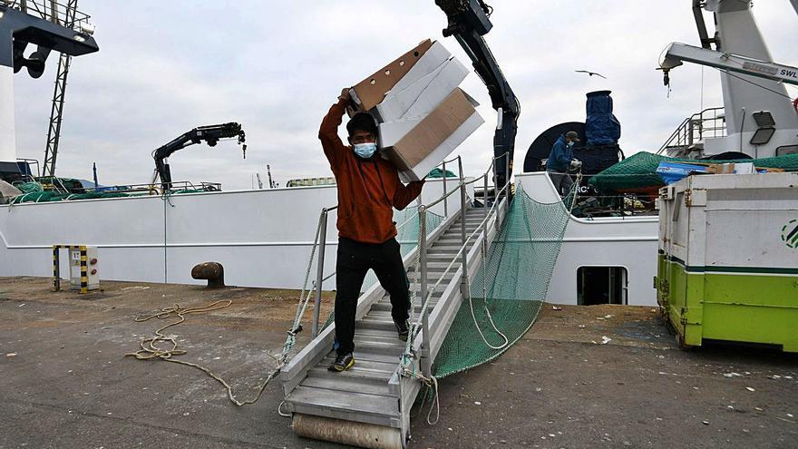 La UE respalda a la flota: vía libre al calamar malvino sin arancel