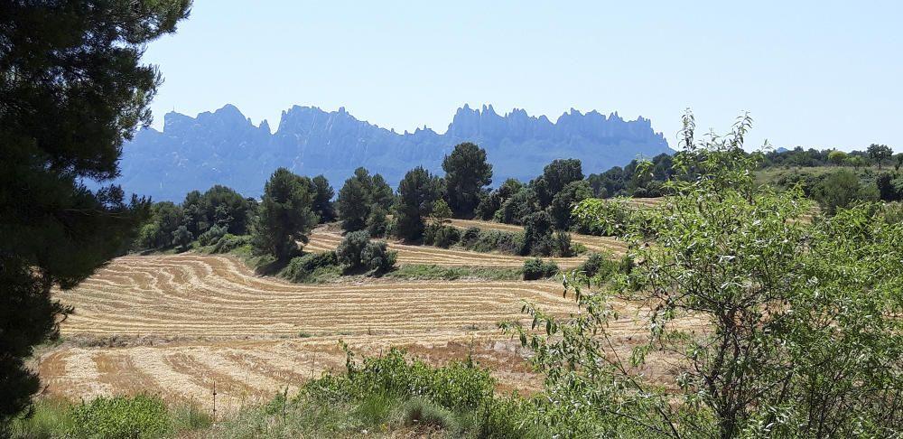 Camps segats amb Montserrat de fons.