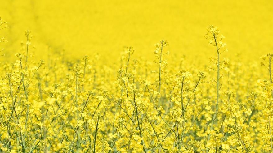 Energía donde menos te lo esperas: biomasa y biogás, metano, aceite de colza, orina...