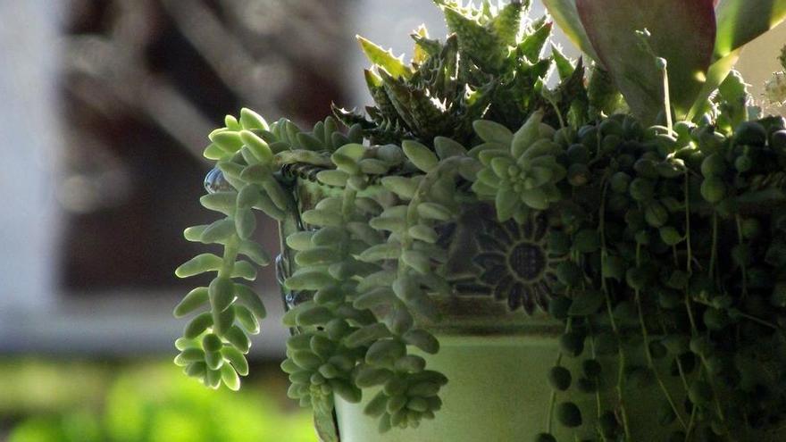 Trucs per cuidar les teves plantes amb vinagre, un remei natural i ecològic