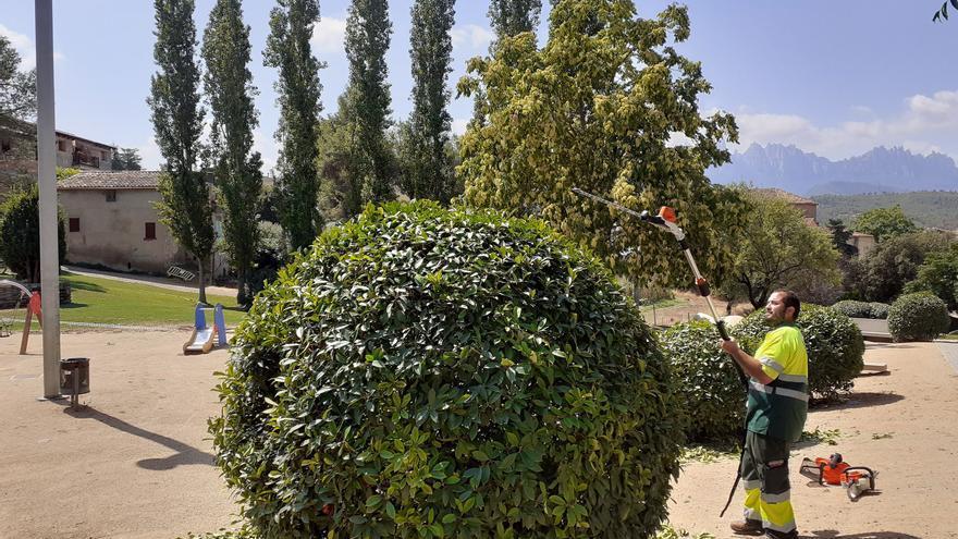 Sant Vicenç estrena un nou servei de jardineria que prioritza les espècies autòctones