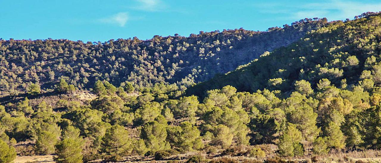 Imagen de Sierra Escalona, protegida como Paisaje desde octubre de 2018. |