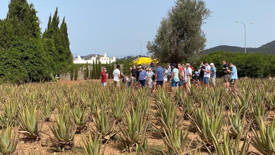 ¿Qué relación tiene el aloe vera de Ibiza con los cruceros?