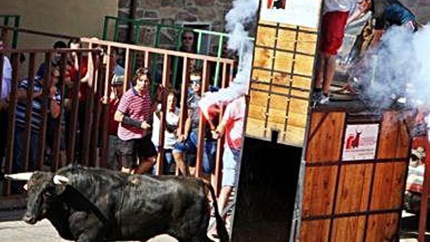 Las fiestas de San Mateo de Alcañices tendrán un encierro urbano con un toro de cajón