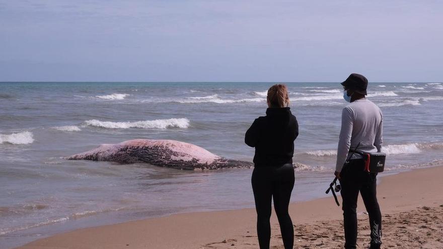 Aparece el cadáver de una ballena en Guardamar