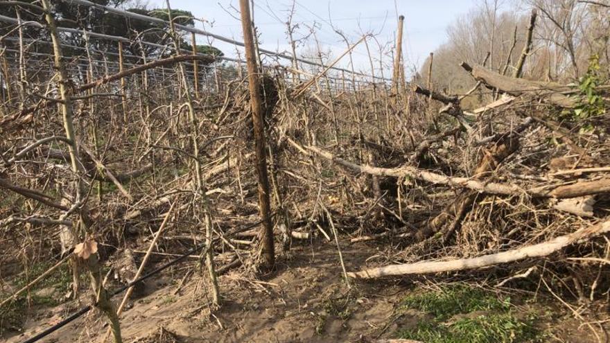 Poma de Girona està avaluant els danys del temporal i avança que «són abundants»