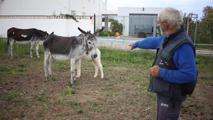 La polémica muerte de los 10 burros en el Desert acaba en Fiscalía