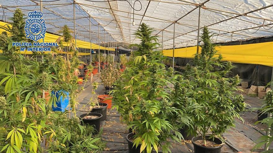 Cultivo ilegal de marihuana en Telde