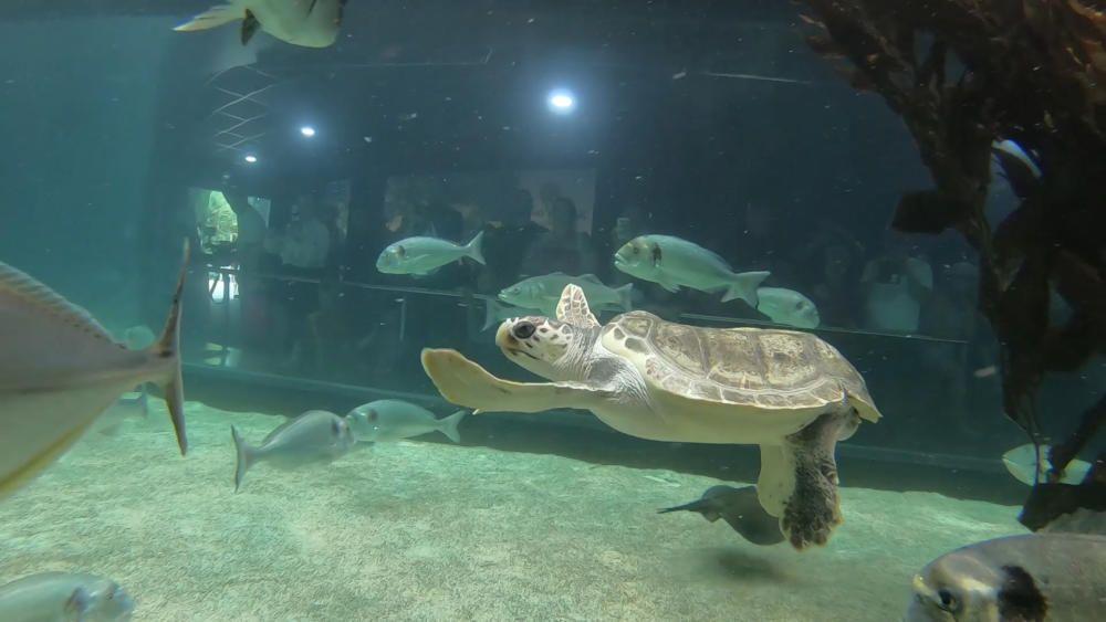 La tortuga Federica disfruta de su nueva vida