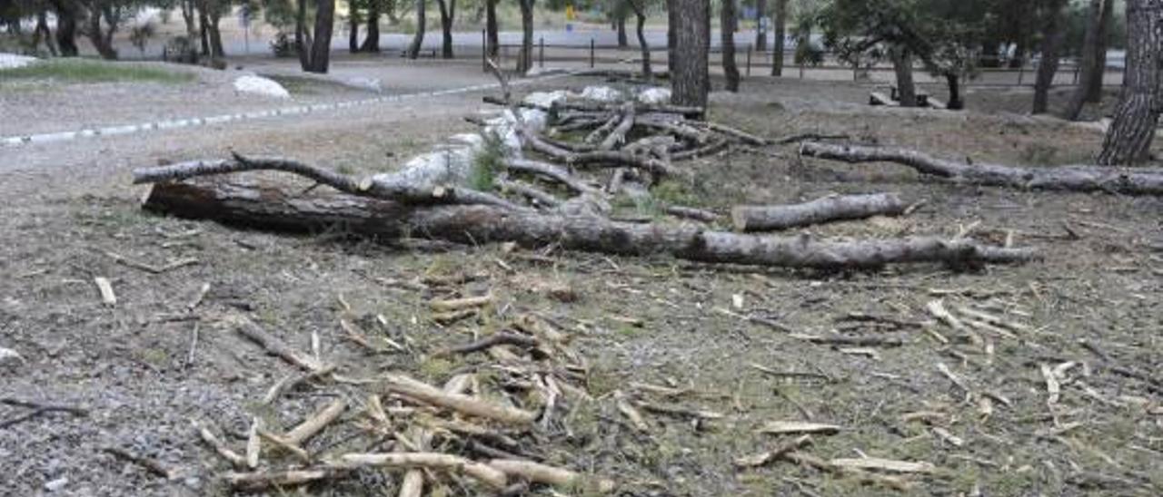 El paraje de la Magdalena tardará diez años en recuperarse de la tala de 300 pinos