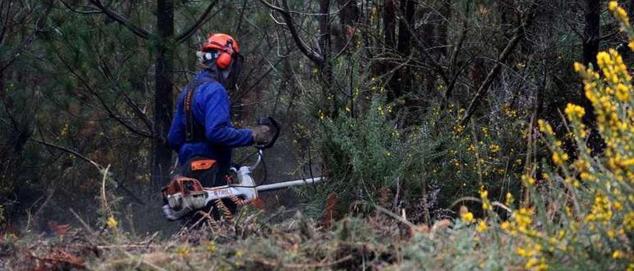 Un operario, en tareas de limpieza, en un monte de Vilagarcía.// I. Abella