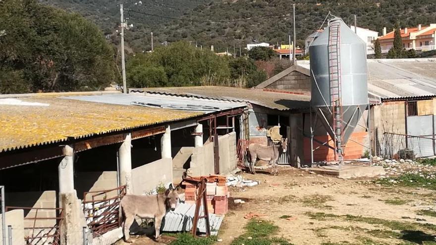 El jutjat ordena a l'Ajuntament de Cantallops la clausura d'una granja de porcs