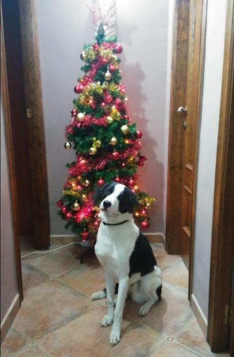 Las mascotas navideñas de los lectores de Levante-EMV