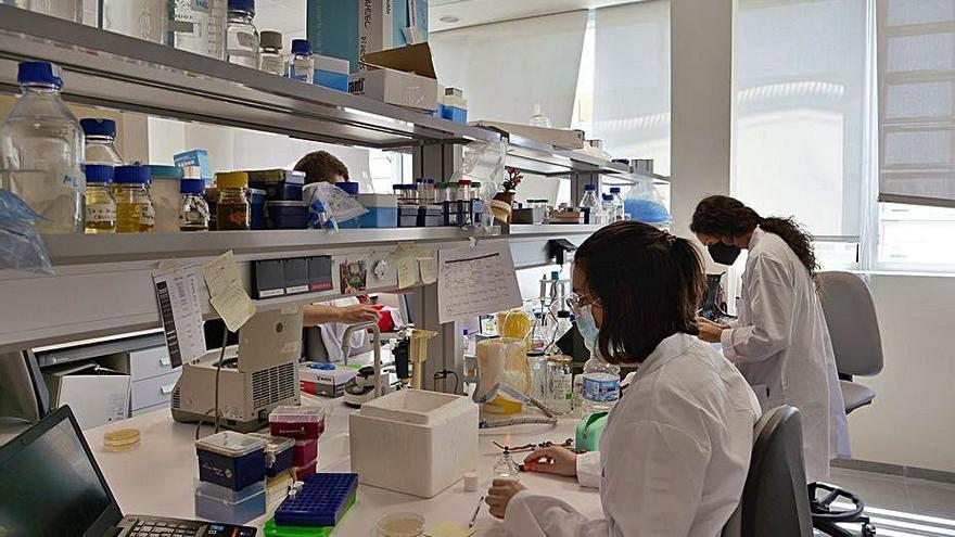 Europa reconoce a la UMA por su apoyo a la carrera científica