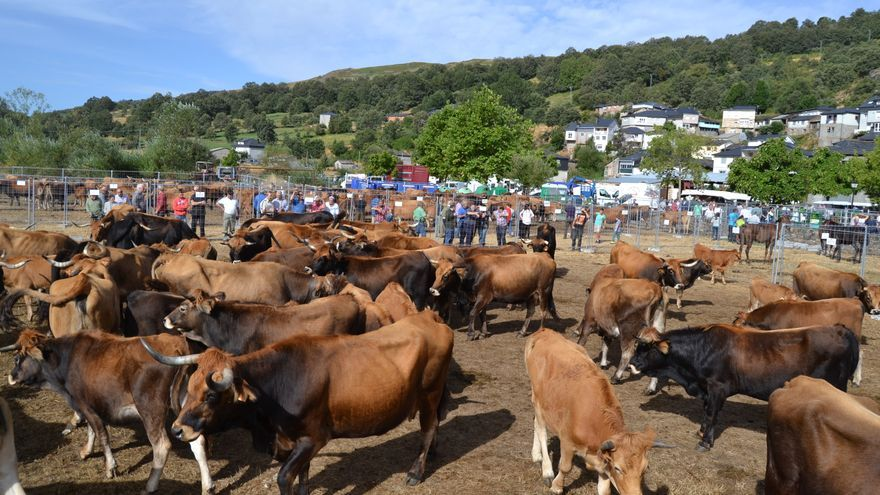 Las razas autóctonas de Zamora reciben subvenciones por valor acumulado de 140.471 euros