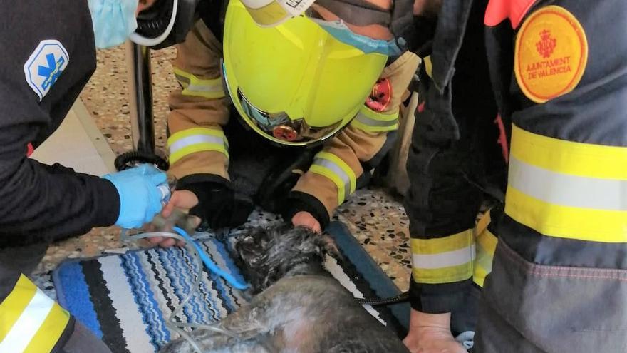 Los bomberos salvan la vida a uno de los tres perros atrapados en un incendio